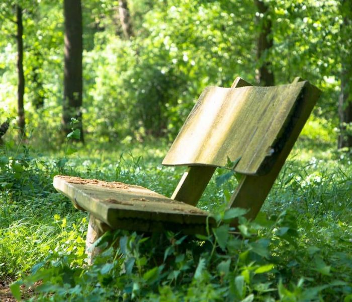 Bench in overgrown field